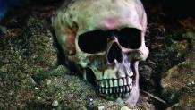 Skull in the dirt