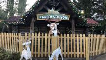 reindeer standing in front of bugs bunny national park ranger station