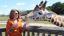 Woman feeding giraffe at Camp Aventura