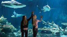 Girls viewing shark aquarium