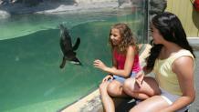 Two girls watching penguin swim