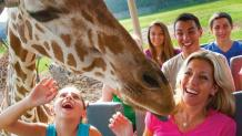Guests seeing a giraffe up close during a trip on Safari Off Road Adventure