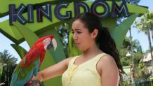 Kingdom Stage