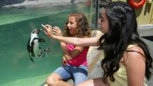 Ocean Discovery - Penguin
