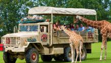 Safari Off Road Adventure during Spring Break