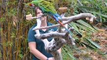 Animal care specialist with a macaw in a tree