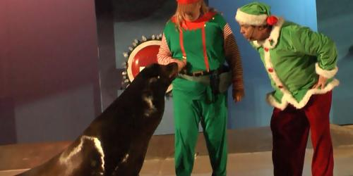 Two elves encounter a spirited sea lion