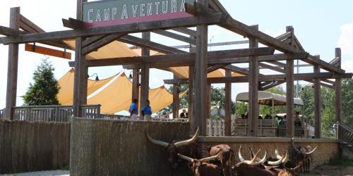 Red Ankole Cattle sitting near camp aventura