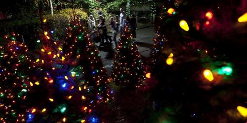 Fully lit Christmas Trees