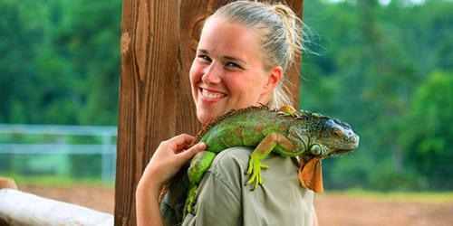 Iguana on care takers shoulder