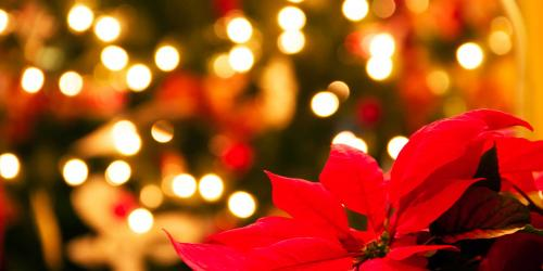 poinsettia with christmas tree