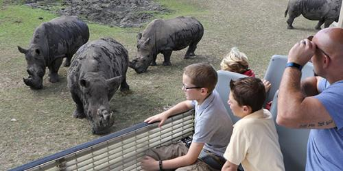 People watching rhinos