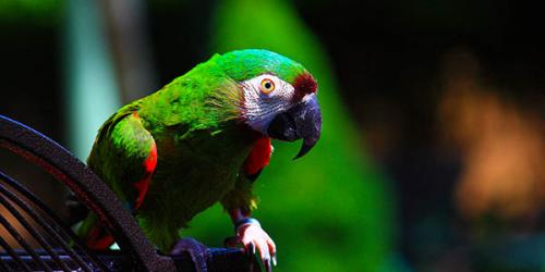 Picture of Severe Parrot