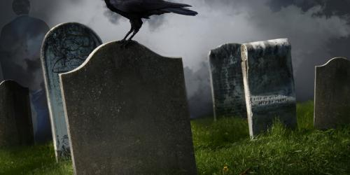 Raven on a grave stone in a cemetery