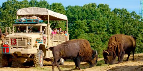Biology Day safari tour