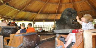 Thrilla Gorilla