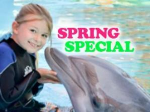 Spring Break Dolphin Discovery!