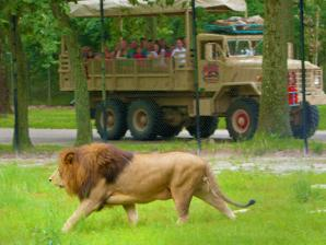 Safari Off Road Adventure - Lion