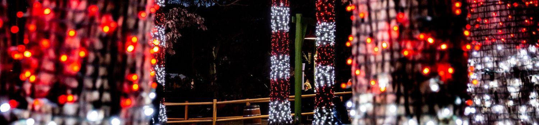 Candy Cane Lights