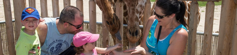 Family feeding giraffe at Safari Camp Aventura