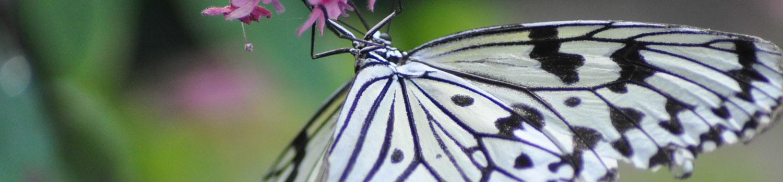Butterfly in the Butterfly Habitat