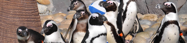 Penguins at Penguin Passage