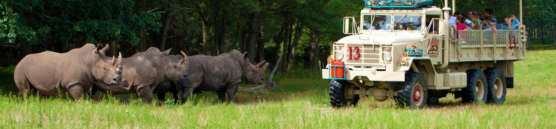 Rhino on Off Road Education safari