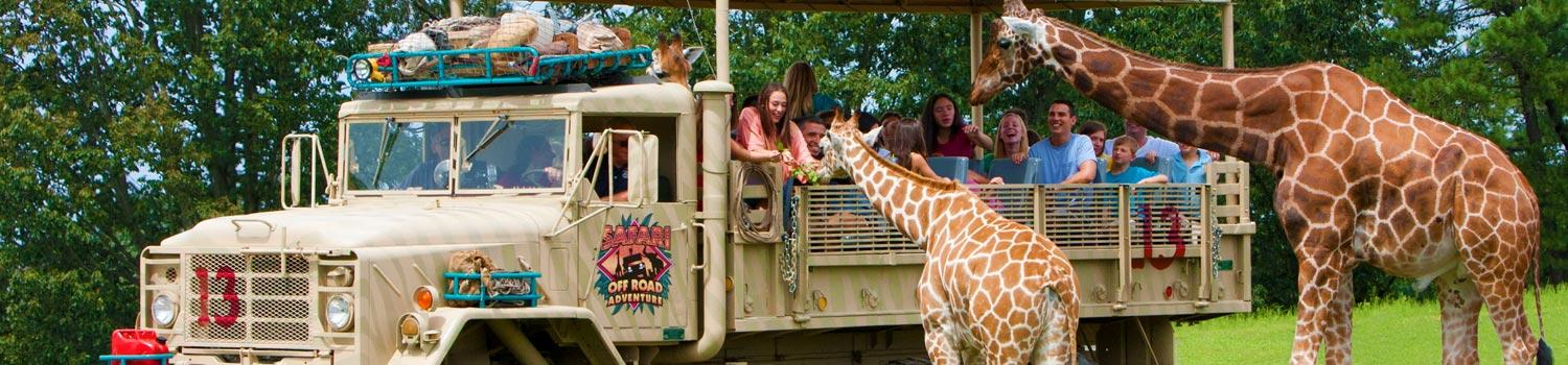 Image result for Six flags great Adventures & wild safari Jackson