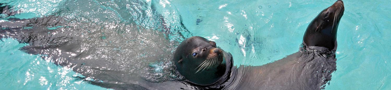Seal Cove