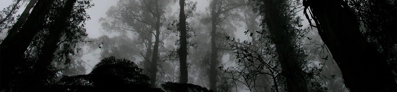 Dark, foggy woods