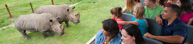 Guests in Safari truck looking at rhinos